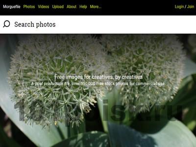 фото morguefile.com